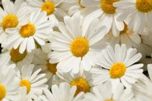 image fleur1